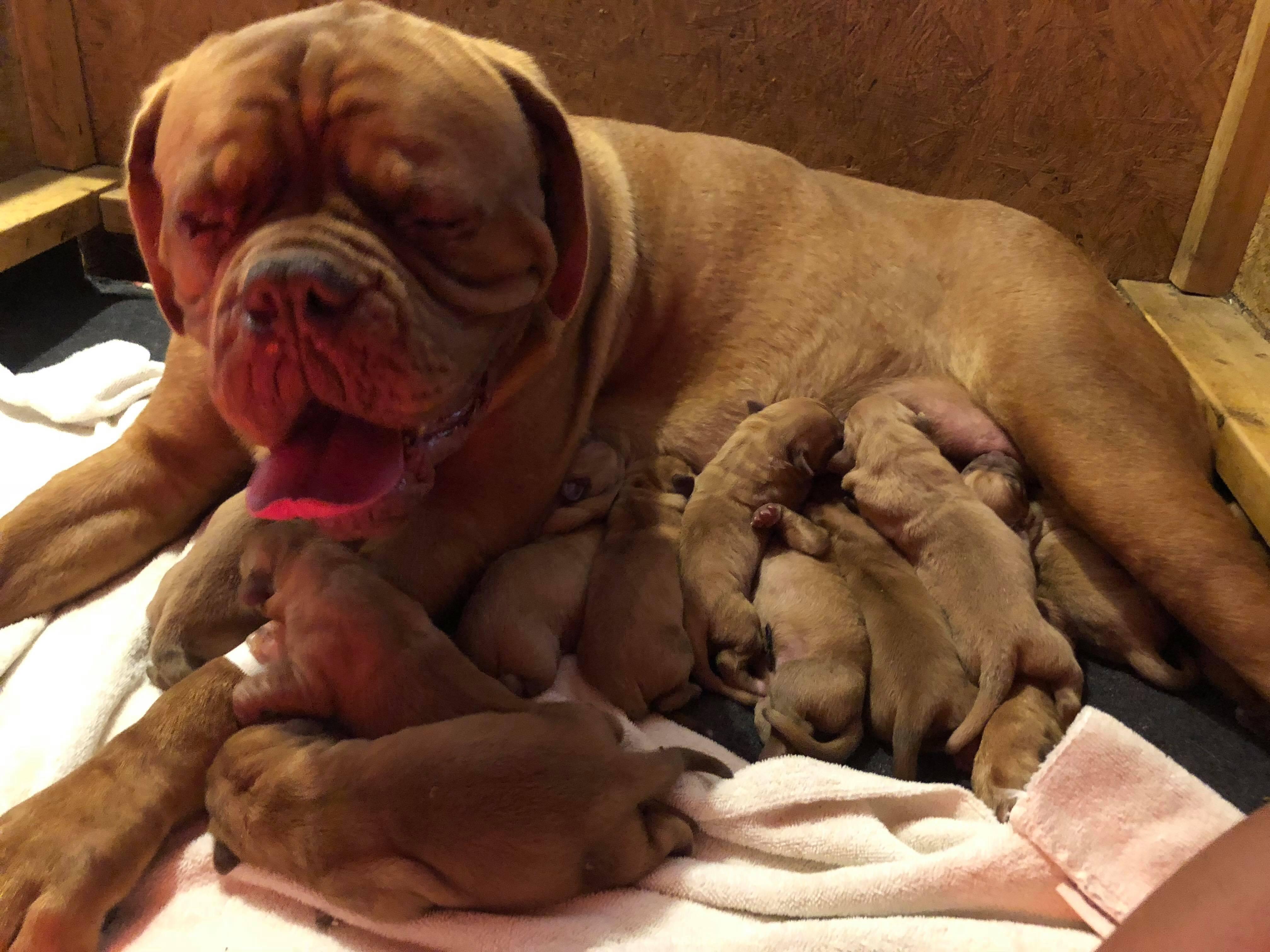 Star pups new born (3)