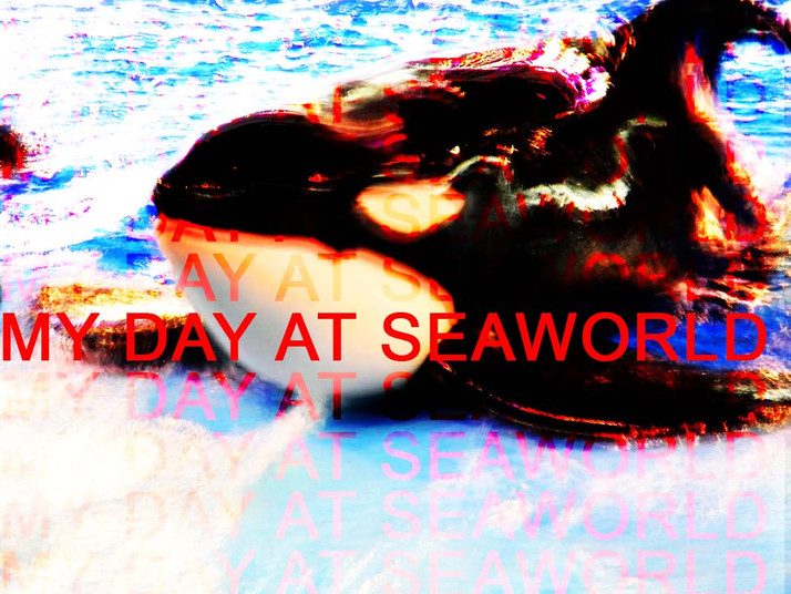 My Day at SeaWorld