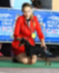 Жестьен Дель Айленд, цвергпинчер,питомник,пинчер,карликовый пинчер,Беларусь,Минск