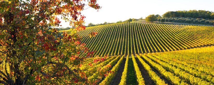 St Emilion Vineyard | Wine Investment | Veblen Wines