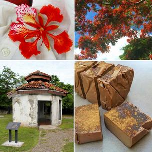 Spanish Cocoa Soap