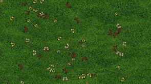 BUTTERFLIES FLY TOWARD MOTION