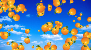 KNOCK OUT ORANGES