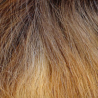 Ash Blond Root
