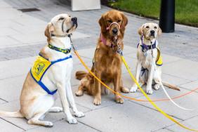 2020 Give a Dog a Job 5K_003_.jpg