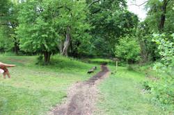 Banneker Trails