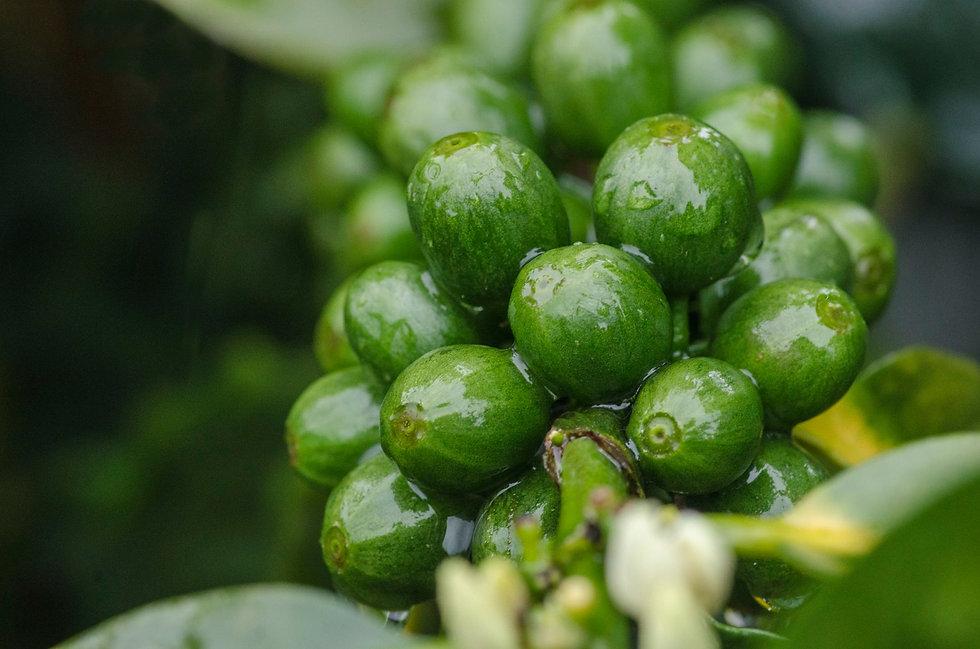 2cafefrutoverde.jpg