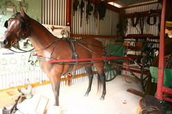 Horse & Sulky