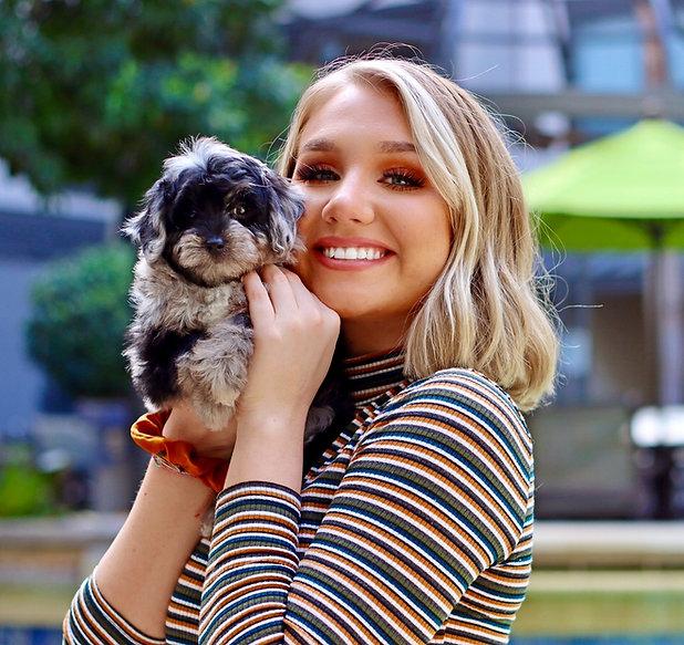 Tiny Jewel Pups Aussiedoodle