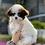 Thumbnail: Domino-  Tiny Toy F1B Cavanese