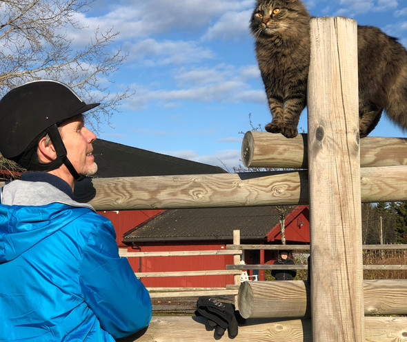 Thomas og katten
