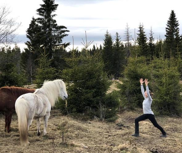 Kittelsens hest?