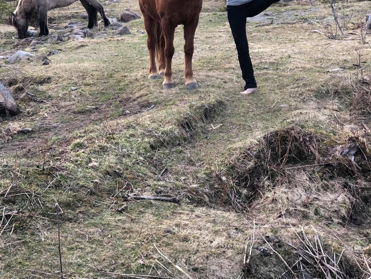 Yoga og hest