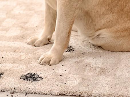 Чому Вам варто чистити килим в професійній пральні?