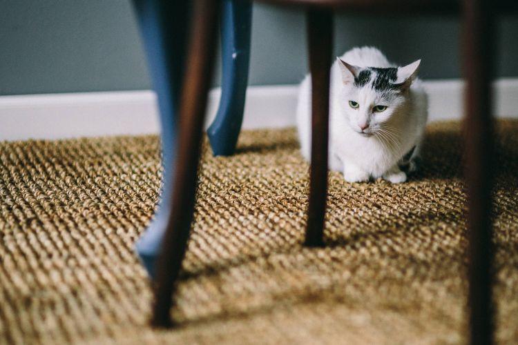 Алергія на килим |КилимКо Хмельницький|чистка килимів|Хімчистка килмів|пральня килимів