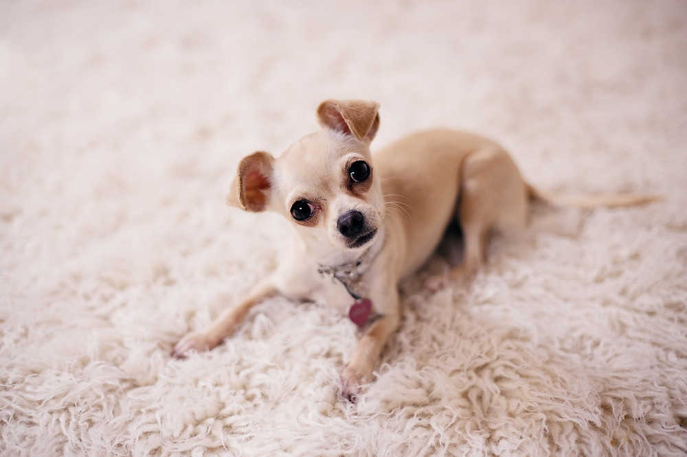 Як чистити вовняні килими