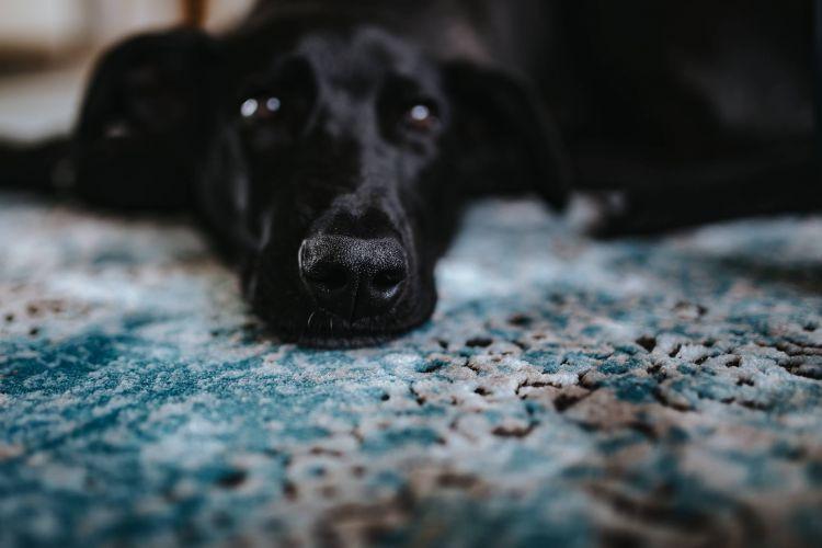 Чи купувати килим на кухню? |КилимКо Хмельницький|чистка килимів|Хімчистка килмів|пральня килимів