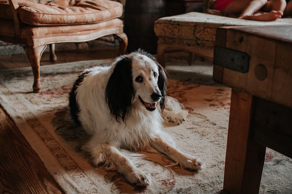 Як килими в сучасному стилі впливають на інтер'єр вітальні | Пральня килимів №1 КилимКо