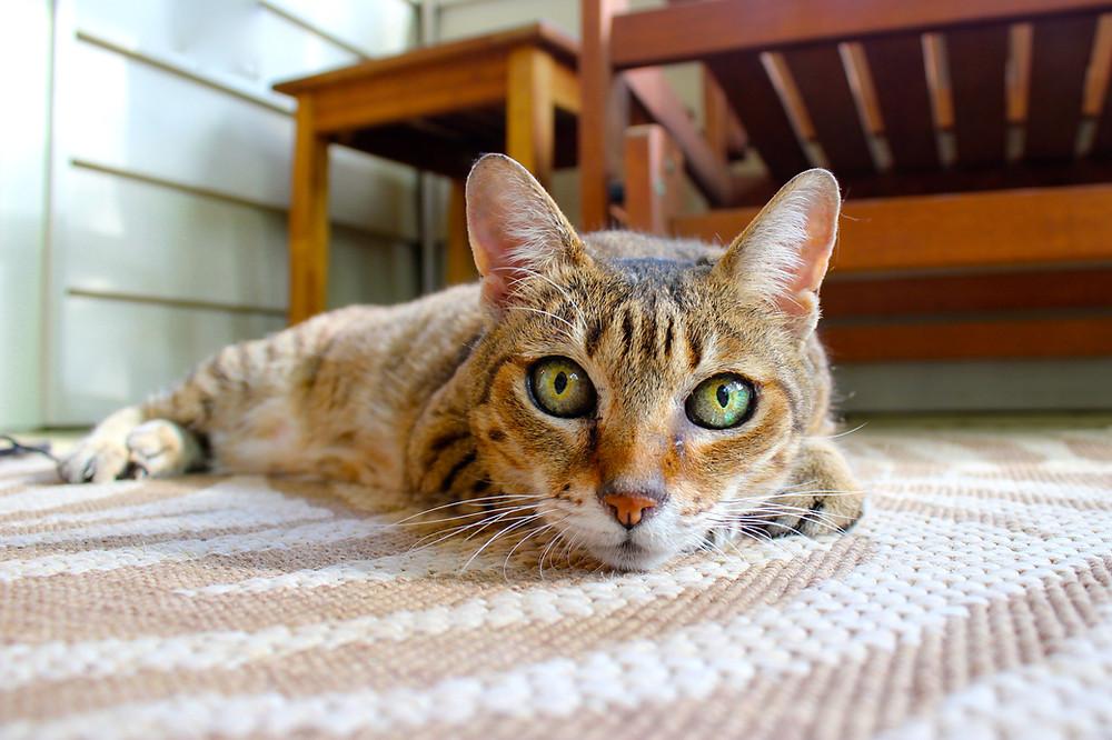 Особливості поліпропіленових килимів |КилимКо Хмельницький|чистка килимів|Хімчистка килмів|пральня килимів