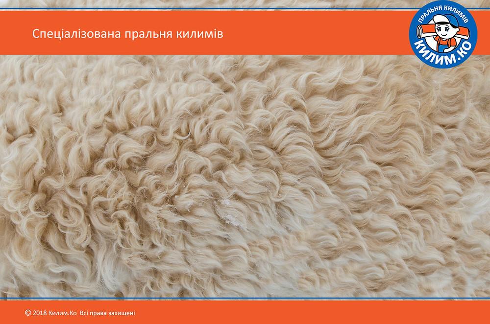 Вовняні килими: переваги та недоліки | Пральня килимів №1 КилимКо