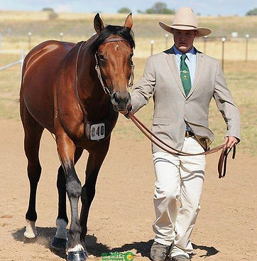 Australian Stock Horse Attards Bypass and John Briggs competing at Nationals in Tamworth.