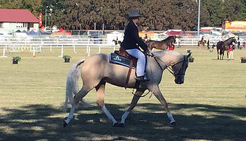 Australian Stock Horse Attards Sheza Pearler