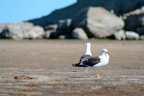 Things I Imagine Seagulls Say About Me