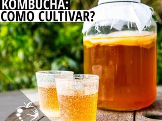 Kombucha: Como Cultivar?