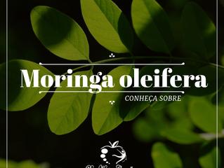 Você conhece a Moringa oleifera?