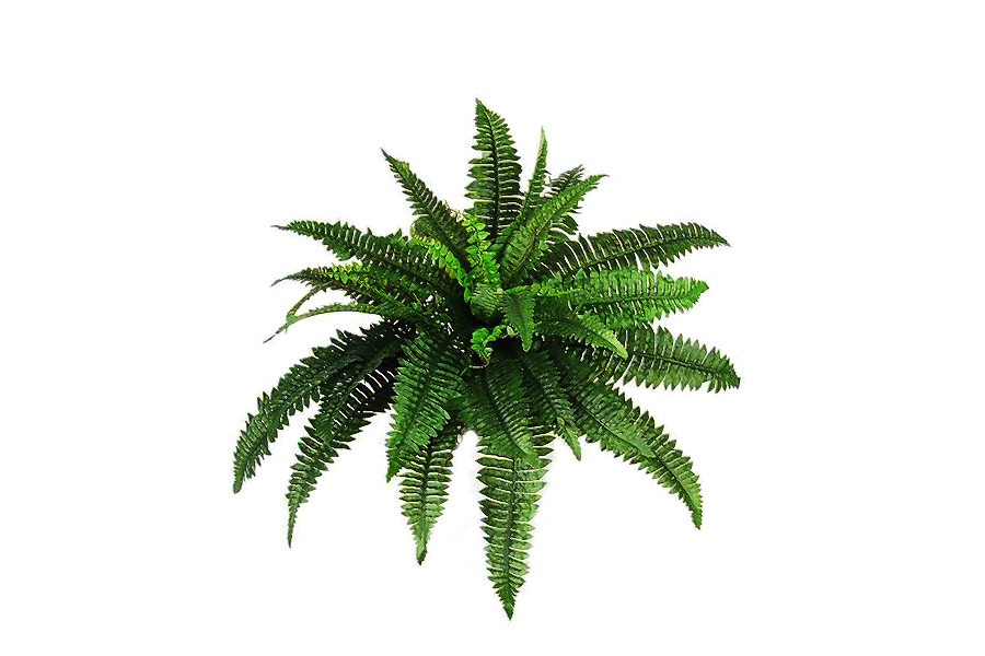 Download-Plants-PNG-Pic.png