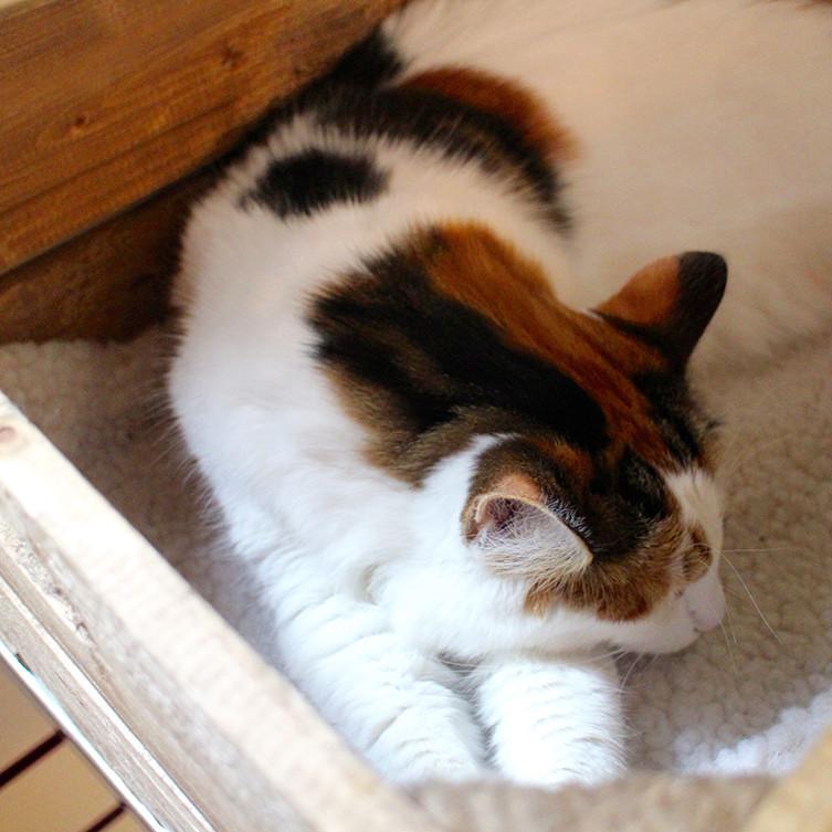 cat-cafe-5