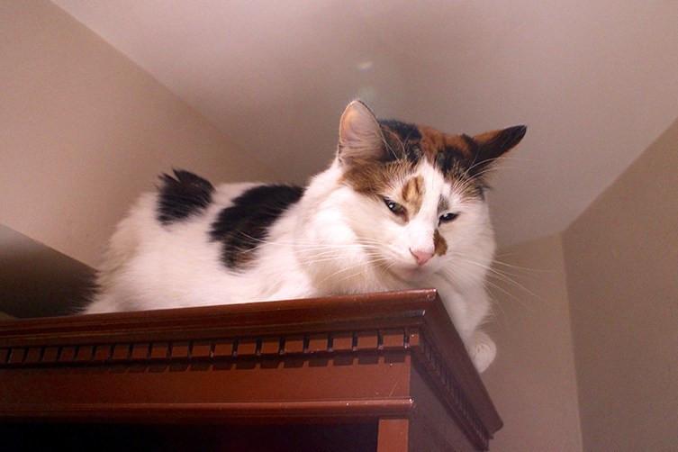 cat-cafe-12