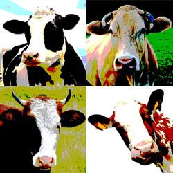 Moo Cows 1 Final (Large).jpg