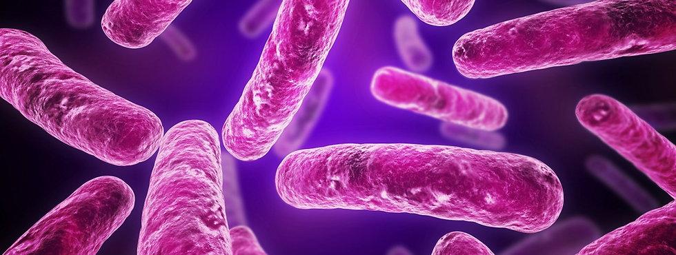 purple_bacteria.1535708717.jpg
