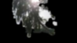 DSC_1005_edited.png