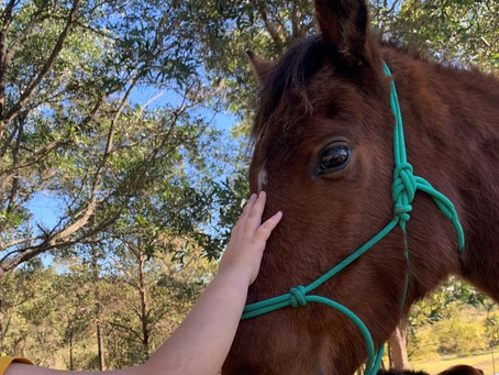 Wally The Brumby Joins us this week