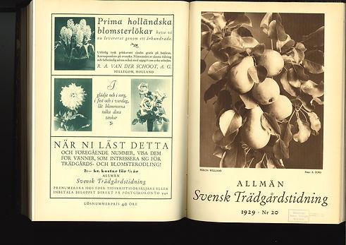 1929_1_Page_1.jpg