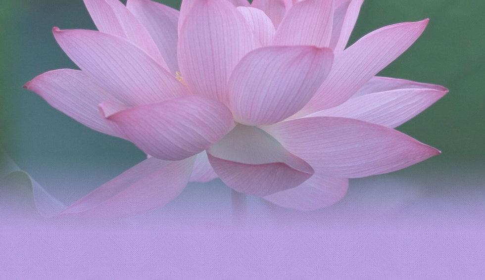 lotus background.jpg