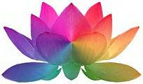 rainbow lotus lge.jpg