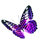 Purple-Butterfly-Transparent-Background.