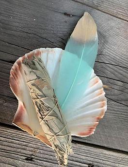 smudge shell.jpg