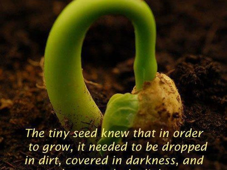 CULTIVATING THE SEED WITHIN PEACE.