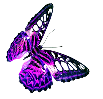 Purple-Butterfly-Transparent-Background_