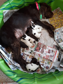 Plum with her puppies