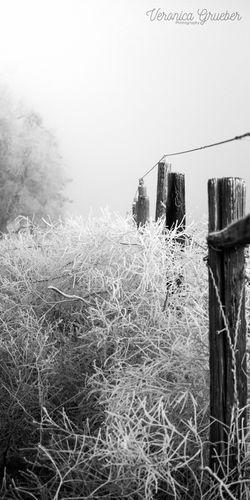 FrostPost