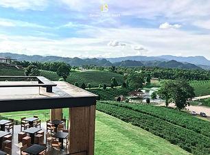 tea-garden.jpg