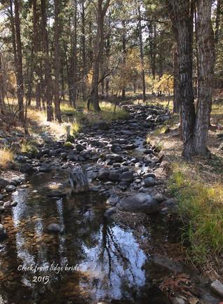 Creek through camp