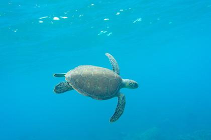Hello Turtle
