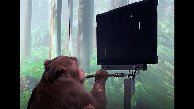 Majmuni i ping-pong