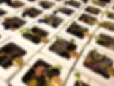 boxes green.jpg